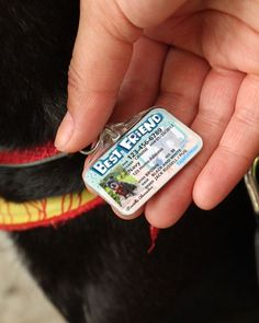 Pet ID Tags save lives! Our durable ID Tags have the most room for extra information, with fields fo Unique Animals, Animals And Pets, Cute Animals, Perros French Poodle, Dog Id Tags, Id Tags For Dogs, Pet Dogs, Dogs And Puppies, Dog Items