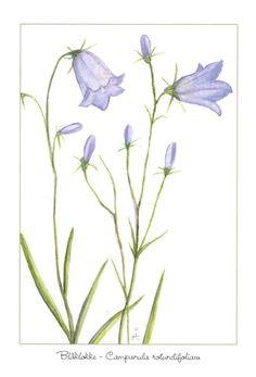 Blomekort Åshild Hansejordet - Blåklokke Summer Time, Art Nouveau, Bullet Journal, Tattoo, Plants, Daylight Savings Time, Tattoos, Plant, Summer