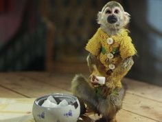 Christmas with Pippi Longstocking Pippi Longstocking Movie, Musical Film, Tove Jansson, Movie Costumes, New Theme, Primates, My Childhood, Childrens Books, Teddy Bear