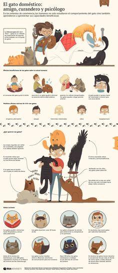 ¿Te gustan los gatos? Tu gato: amigo, curandero y psicólogo #infografia