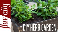 Here you have a tutorial to grow your own cooking herbs. #permaculture #gardening #video