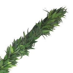 FiftyFlowers.com - Willow Seeded Eucalyptus and Bayleaf Garland