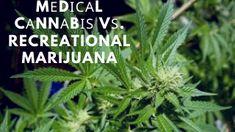 Mеdісаl Cаnnаbіѕ vѕ. Recreational Marijuana Disorders, Health Benefits, Drugs