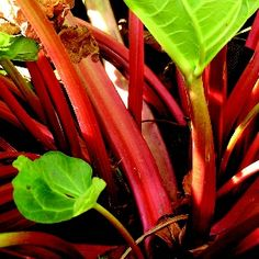 Celery, Hub, Stuffed Peppers, Vegetables, Garden, Food, Garten, Stuffed Pepper, Lawn And Garden