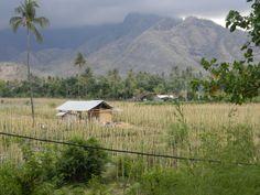Chilipeltoja Balin pohjoispuolella