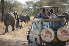 Safari adventure, Tarangire National Park, Tanzania