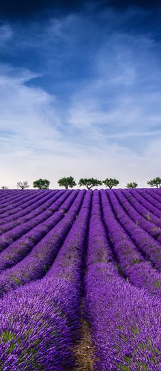 Lavander, Provenze, France More (travel photos paris) Beautiful World, Beautiful Images, Beautiful Flowers, Lavender Blue, Lavender Fields, Color Photography, Nature Photography, Shades Of Purple, Champs