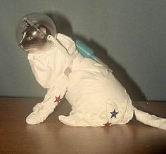 Ghoul For Cats: The Top 10 Freakiest Scariest Halloween Cat Costumes Cool Cats, I Love Cats, Crazy Cat Lady, Crazy Cats, Gatos Cool, Space Cat, Vintage Cat, Vintage Space, Funny Cats