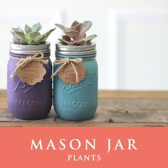 メイソンジャー 多肉植物 サボテン Ball Mason jar メイソンジャー レギュラーマウス 16oz メイソンジャープランツ 植物 ギフト 2個セット