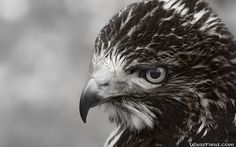 You can view, download and comment on Eye of Prey free hd wallpapers for your desktop backgrounds, mobile and tablet in different resolutions.