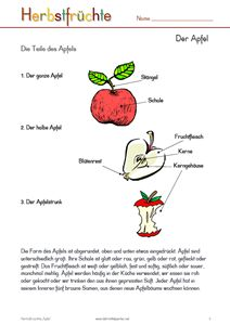 106 best Apfel images on Pinterest   Apples, Apple theme and Day care