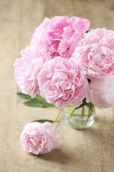 Larger blooms like peonies are perfect by themselves in a jar or vase. This gorgeous bouquet of peonies would look beautiful for wedding centerpieces or to warm up a living room or office space! Shop domestic peonies in a variety of beautiful colors from May through June at GrowersBox.com!
