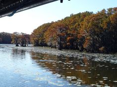 Views from the stream boat in autumn.  Riding on The Graceful Ghost Steamboat on Caddo Lake near Uncertain, TX.   Go to http://www.yourtravelvideos.com/view.php?view=140412 or click on photo for video and more on this site.