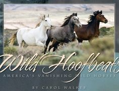 Beautiful wild horses still running free awesome photography by Carol Walker thank you God for Wildhorse's still, so beautiful