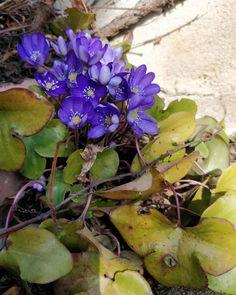 💚 Plants, Instagram, Plant, Planets