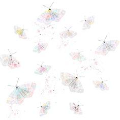 moths by dansedelune
