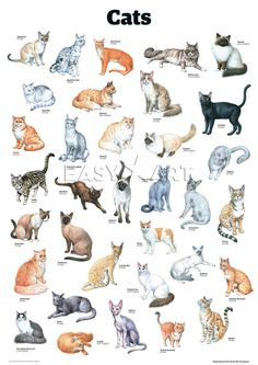Cats, Guardian Wallchart Prints from Easyart.com