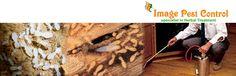 Anti Termites Pest Control Bangalore