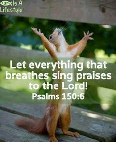 All Creation Praises JESUS!