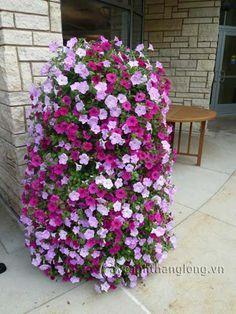 how to make a column basket planter with pictures   Dạ yến thảo biển sóng - Loài hoa đẹp rực rỡ trang ...