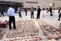 Chinese officials inspecting  fossilised dinosaur eggs after a police raid.