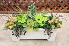 Terra Nova Nurseries - Professional Growers - Container Recipes