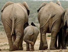 World elephant day! Baby Elephant Walk, Elephant Love, Elephant Art, African Elephant, Elephant Gifts, Elephant Family, Animals And Pets, Baby Animals, Funny Animals