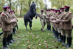 Three cheers from the troops: Soldiers from the Household Cavalry Mounted Regiment say farewell to their favourite horse, Thomas, retiring after 20 years of service.