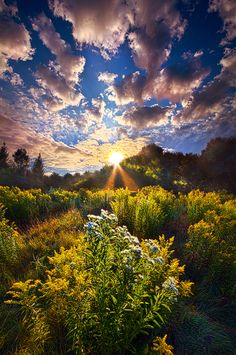 Sunrise Photograph - Daybreak by Phil Koch Beautiful World, Beautiful Images, Landscape Photography, Nature Photography, Photography Tips, Digital Photography, Take Better Photos, Beautiful Sunrise, Amazing Nature