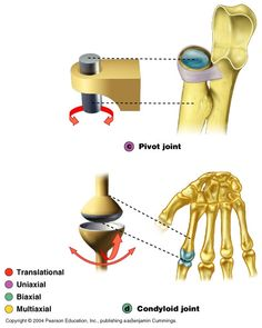 Types of Joints -- Functional Musculoskeletal System, New Names, Human Anatomy, Muscles, Education, School, Image, Human Body Anatomy, Muscle