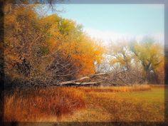 The Path by CarissaLynn.deviantart.com