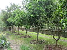 Orange Trees in the Kitchen Garden at Laura Plantation Orangers dans le potager de Laura Plantation Plantation Houses, Orchard Design, Orange Trees, City Farm, Home Landscaping, Fruit Garden, Private Garden, Country Homes Decor, Gardens