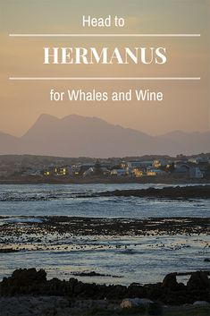 "Hermanus is the newest wine route in South Africa where the ""champagne air"" produces unique wines. Oh and you can see whales right from the town's rocky shore! South America Destinations, South America Travel, Top Destinations, Holiday Destinations, Monuments, Wine Safari, Rocky Shore, African Safari, Africa Travel"