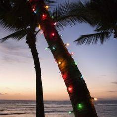 in the Islands.... Beach Christmas, Christmas Palm Tree, California Christmas, Tropical Christmas, Christmas In July, Coastal Christmas, Christmas Florida, Merry Christmas, Caribbean Christmas