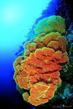 Maldives-Ari-Atoll-088