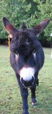 really neat donkey blog. It has snacks for donkeys, how to care for them, how to train them and homeade bug repellant.