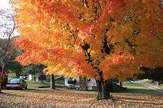 Pin By Kimberly Davis On Waynesville Nc Beautiful