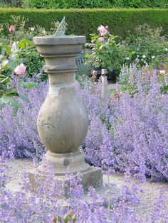 Catmint (Nepeta X faassenii 'Walker's low') in the rose garden at Chirk Castle