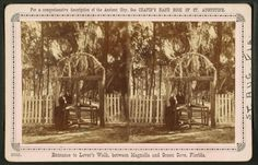 Entrance to Lover's Walk, between Magnolia and Green Cove, Florida. Florida Springs, New York Public Library, Magnolia, Entrance, City, Green, Painting, Entryway, Magnolias