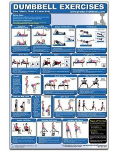 Dumbbell Exercises-Lower Body/Core/Chest & Back Laminated (Poster) - http://www.fitrippedandhealthy.com/dumbbell-exercises-lower-bodycorechest-back-laminated-poster/  #Supplements #Fitness #Weightlosstips #DietTips