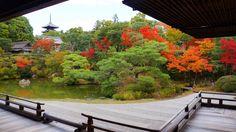 京都 仁和寺 御殿北庭 五重塔 紅葉 Japan,Kyoto,Ninna-ji Temple,autumn leaves,colored leaves
