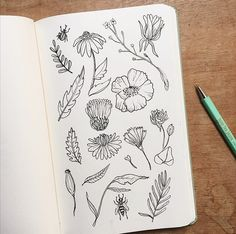254 vind-ik-leuks, 4 reacties - Anja Mulder (@deblauwebeer) op Instagram: 'Taking time to sketch new flowers & plants.'