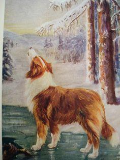 Howling Collie - Vintage Children's Book Illustrations - 1920's. $4.25, via Etsy.