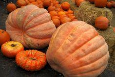 Cooking and Preparing Fresh Pumpkin - complete tutorial