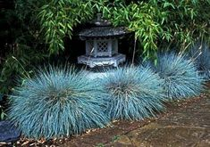 Blue Fescue Grass 200 seeds Festuca glauca ground cover | Etsy Perennial Grasses, Drought Tolerant Landscape, Perennials, Ornamental Grasses, Fescue Grass, Blue Fescue, The Heat, Low Maintenance Landscaping, Ground Cover Plants