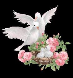 Jada..Image result for doves