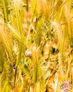 #Sun #Leaf #Snail #Plant #White #Green #Plants #Wheat #Nature #Sunset #Branch #Orange #SunLight #Branches #Shrubbery #YellowLight #Photograph #OrangeLight #Photography #Photographer #PhotoOfTheDay #BorPhotography #NaturePhotograph #NaturePhotography #NaturePhotographer