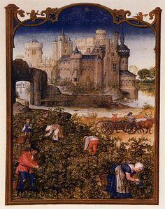 Le fatiche di Settembre: vendemmia - Breviario Grimani - manoscritto miniato - scuola Gand-Bruges - 1490-1510 -  Venezia - Biblioteca Nazionale di San Marco.