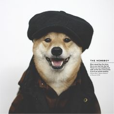 Meet Bohdi: The World's Most Fashionable Dog Akita Dog, Shiba Inu, Menswear Dog, Life After Denim, Dog Presents, Best Caps, Japanese Dogs, Types Of Hats, Men With Street Style