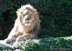 Lincoln Park Zoo - IL | tips for visiting this beautiful FREE zoo with young children | Bambini Travel